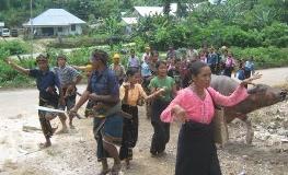 Keluarga membawa kerbau saat datang di salah satu kedukaan di Sumba