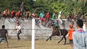Salah Satu Joki Kecil Saat Akan Menghentikan Kuda Selepas Finish di Kelas Pemula 2, Pacuan Kuda di Waingapu Sumba Timur NTT [Max FM Waingapu Heinrich Dengi]