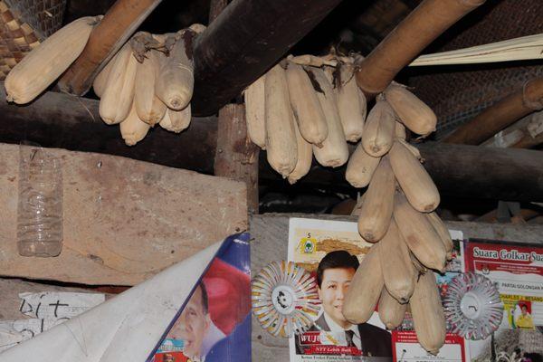 Hanya Tinggal Beberapa Randi Jagung Yang Disimpan Untuk Bibit Musim Tanam Berikutnya di Rumah Yakop Maramba Jawa [ Foto : Heinrich Dengi ]