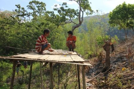 Warga Dusun Tandairotu Desa Katiku Loku Kec. Matawai Lapau Menjemur Iwi di Hutan