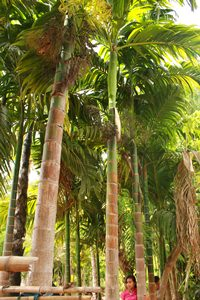 Pohon Pinang di tananm di perbatasan tanah kebun Melkianus Ratu [ Foto : Heinrich : Dengi ]