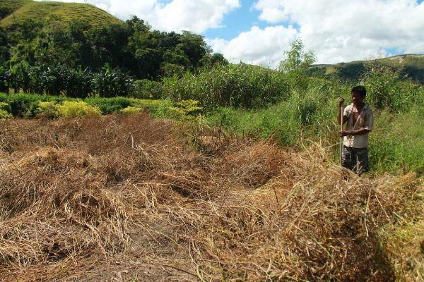 Hapu Mbay - Warga Desa Kiritana mempersiapkan lahan untuk musim tanam ini [ Foto : Heinrich Dengi ]
