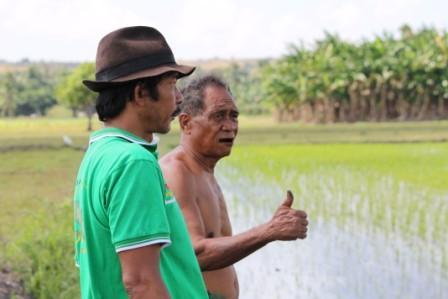 Sawah Retang Randa Djawa ( tdk pakai baju ) di Kawangu ada 10 Ha, yang ditananami hanya 30 are karena kurang air, sawahnya bisa hijau karena gunakan pupuk organik